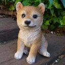犬の置物 柴犬子犬 39QY いぬ イヌ 動物 オーナメント ガーデン インテリア 雑貨 置物 庭 ガーデンマスコット 雑貨小物 ディスプレィ 陶器