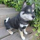 犬の置物 黒柴犬 BK53QY いぬ イヌ 動物 オーナメント ガーデン インテリア 雑貨 置物 庭 ガーデンマスコット 雑貨小物 ディスプレィ 陶器 リアル