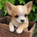 犬の置物 チワワ ハンギングドッグ T14201 いぬ イヌ 動物 オーナメント ガーデン オブジェ 庭 リアル ガーデニング インテリア 雑貨 マスコット