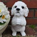 犬の置物 プードルのお願いホワイト 7358HT いぬ イヌ 動物 オーナメント ガーデン インテリア 雑貨 置物 庭 ガーデンマスコット 雑貨小物 ディスプレィ 陶器 リアル