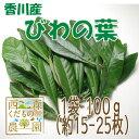 【送料無料】香川産 びわの葉 100g(1袋 生葉15-25枚)♪[国...