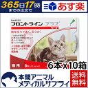 【送料無料】猫用 フロントラインプラス 10箱 60本入 60ピペット【動物用医薬品】【365日あす楽】
