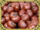 【送料無料】天津甘栗1.5キロ!発送当日の炒り立ての甘栗だけをお届け中♪横浜中華街のお土産にも大変喜ばれています。【お中元】【2sp_120810_green】