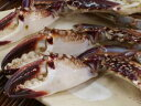から??いチゲ鍋、贅沢なおみそ汁に最適っ!切りワタリ蟹1kg