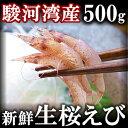 地元駿河湾産 高級 生桜えび(さくらえび) 500g【ギフト】