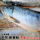 北海道産 天然物新巻鮭(秋鮭)一本物(約1.7Kg〜2Kg) 化粧箱入 お歳暮 お中元 贈り物 お祝 お正月につきもの 北海道の味 絶品の新巻き鮭