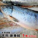 【送料無料】北海道産 天然物新巻鮭(秋鮭)一本物(約3Kg)...
