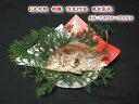 お正月用【魚秀の祝鯛】12月29日限定発送天然・明石鯛・生の時500g