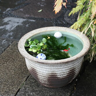 13, Ash glaze thousand corrugated water bowls! Shin Raku suiren pots! Ideal for fish bowls, fish bowl! Water lilies pots / pottery water lily pot / Lotus pots / already pot / medaka pots / pots / pottery / water coupled pots / water bowl / water lilies p