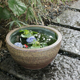 No. 10 kilns skin water bowls Shin Raku suiren pots! Ideal for fish bowls, fish bowl! Water lilies pots / pottery water lily pot / Lotus pots / already pot / medaka pots / pots / pottery / water coupled pots / water bowl / water lilies pots / easy baked