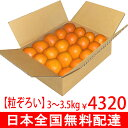 《 うまさ 自称日本一!》「屋久島たんかん」つぶぞろい L・LL玉20個3.3〜4Kg【無料配達タンカン】