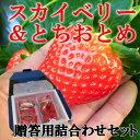 栃木県産いちごスカイベリー&とちおとめ詰合わせセット 1箱贈...