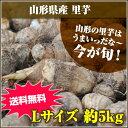 ★山形の里芋はうまいっだな~★山形県産 里芋 Lサイズ 5kg