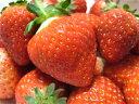 甘いだけじゃない酸っぱさもあります!どんどん食べれちゃう山形県の新品種のいちご【おとめ心...
