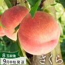 [9月お届け] 山形県朝日町産 特大 かための桃 さくら2.5kg(4〜8玉)【生産者直送のた