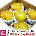 山形県産 シルバーベル 特大玉 約5kg(約10〜12玉) 洋梨