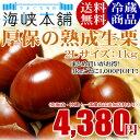 熟成生栗2Lサイズ 1kg(山口県産 厚保の栗) 送料無料 なま栗 くり マロンファーム