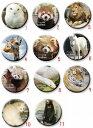 【山口県】【周南市】徳山動物園 マグネット(30mmサイズ)(10001448)