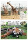 【山口県】【周南市】徳山動物園 ポストカード8枚入り(10001449)