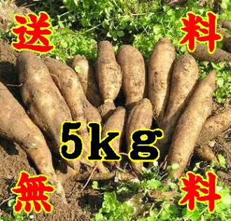 Yacon raw potato fruits like 5 kg