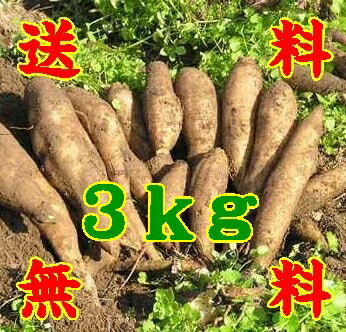 Yacon fruits like raw potatoes 3 kg * additional shipping, Northeastern costs 300 yen, Hokkaido and Okinawa 500 yen * (10000916)