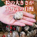 【広島直送】広島瀬戸内産「大野あさり」【アサリ大2kg】