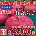 【常温便、送料無料】青森県産  有袋ふじ 訳あり 10Kg(約10キロ)  晩生種りんご