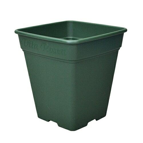アップルウェアー ロゼアスクエア 330型 グリーンの商品画像