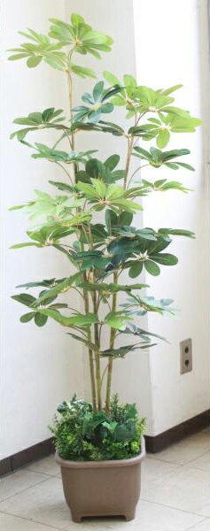 【CT触媒】カポックツリー150〔TB938〕【DG】r【西濃便】【楽ギフ_包装】【造花】 【送料無料】インテリアグリーン・現代の進化した人工観葉植物