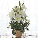 【CT触媒】上品なカサブランカの鉢植【シルクフラワー】