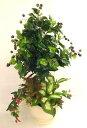 防汚防臭、空気清浄作用のあるインテリアグリーンCT触媒加工のベリースプレーの鉢植え