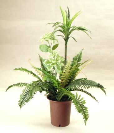 CT触媒加工のドラセナとシダとユーフオルビアの寄植え【楽ギフ_包装】造花 観葉植物
