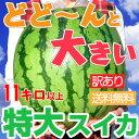【訳あり特大スイカ】大きいスイカほど美味しい!11キロ以上(...