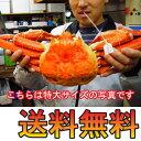 【送料無料★かに酢付き】香住の茹で松葉かに(ズワイガニ)大サイズ800g(1匹)[冷蔵][茹で松葉がに800gカニ酢1本]