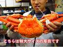 本場の番ガニ[送料無料][冷蔵]香住の茹で松葉かに(ズワイガニ) 大サイズ900g(1匹)[ずわいがに]