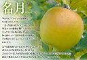 名月りんご 中玉1個