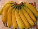 バナナ15本【楽ギフ_包装選択】【楽ギフ_のし宛書】【楽ギフ_メッセ入力】
