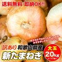 【100箱限定大セール!最安値挑戦!1kg=149円】和歌山...