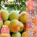 【予約受付開始】【お試し】和歌山県産 南高梅 完熟梅 秀品 1kg 3Lサイズ以上(3Lから4