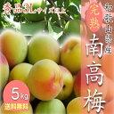 【予約受付開始】和歌山県産 南高梅 完熟梅 秀品 5kg 3Lサイズ以上(3Lから4Lサイズ混
