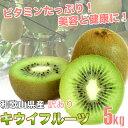 和歌山県産 訳あり 国産 キウイフルーツ 5kg バラ詰め ご自宅用【送料無料】