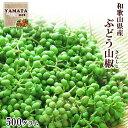 さんしょう ぶどう山椒 和歌山県産 生山椒 500g 送料無料 山椒の実 生産量日本一の和