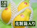栄養価が高く美容にいいフルーツ宮崎県産サンライズパパイア(パパイヤ)[3個入り箱]