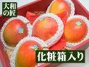ブラジル産 アップルマンゴー[大玉5個入り化粧箱]