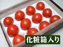 4月中旬以降予定フルーツトマト発祥の地高