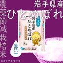 【ひとめぼれ】 米 岩手県産ひとめぼれ 白金の雨 5kg