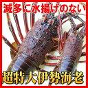 幻の特大伊勢海老 超特大500gサイズ(活〆冷凍)