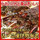 伊勢志摩産伊勢海老 活〆冷凍1kg入り(8尾?10尾)