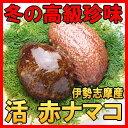 冬の珍味と言ったら赤ナマコ!コリコリとした触感が美味しいんです!伊勢志摩の綺麗な海水と一緒に活のままお届けします。赤ナマコ500g