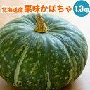 【GIFT】 北海道産ホクホク栗味かぼちゃ1玉(1.3kg以上) 【送料無料】 北海道産かぼちゃで甘い!栗のような味のかぼちゃ農家さん自慢..